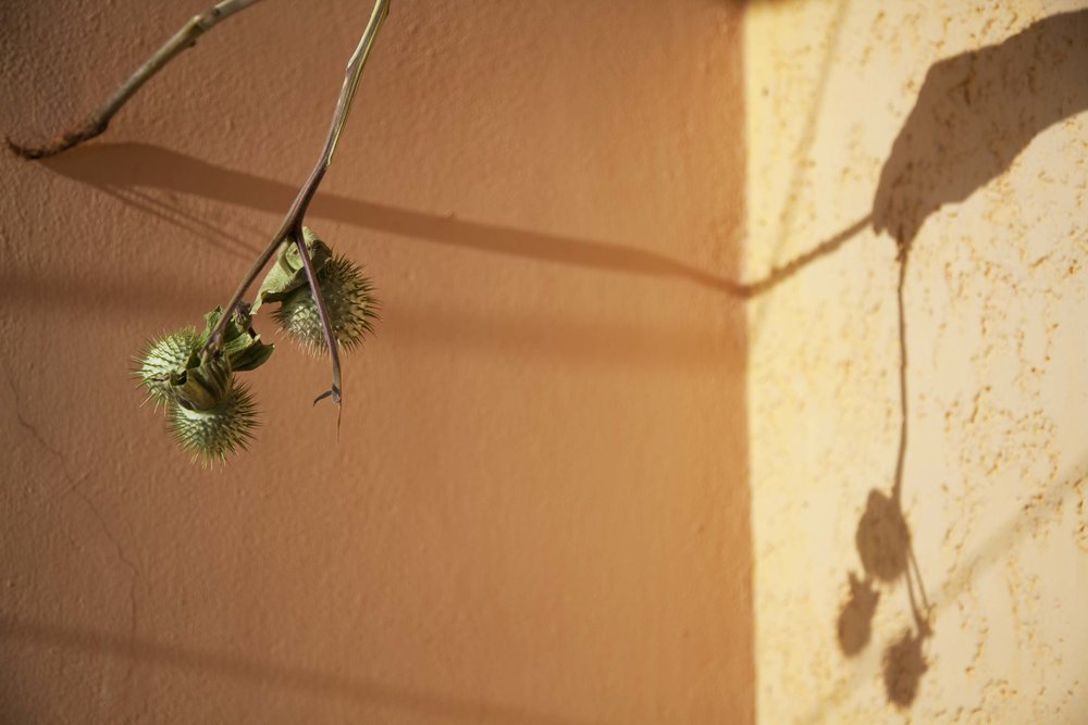 Sunlight and Spiny Seed