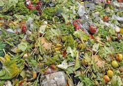VeggiDome Food Waste.jpg