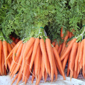 VeggiDome Carrots