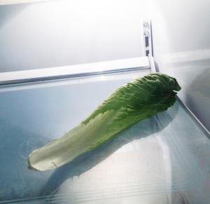 VeggiDome