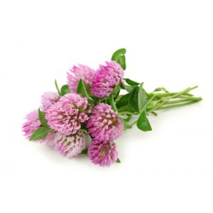 Traditionally used to treat cancers, Red Clover Blossom has a sweet grassy aroma and flavor. It was once burned on Chinese altars, and is still used to alleviate coughs.