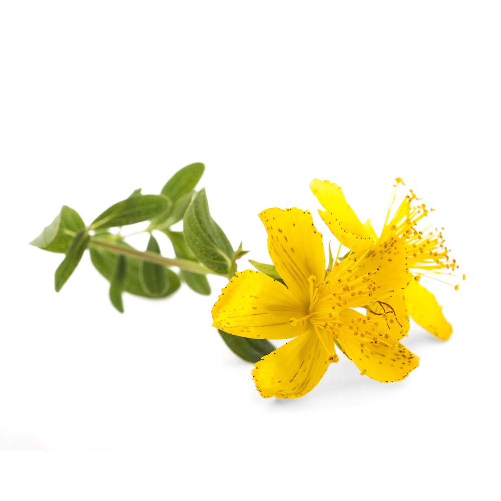 St. John's Wort has been used historically to exorcise evil spirits and remove melancholia. It is still prescribed today as an anti-depressant - boosting interest and self-esteem.