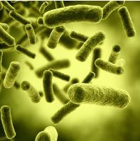 Probiotics for Skin Health