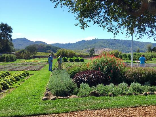 The French Laundry Garden in Yountville, CA