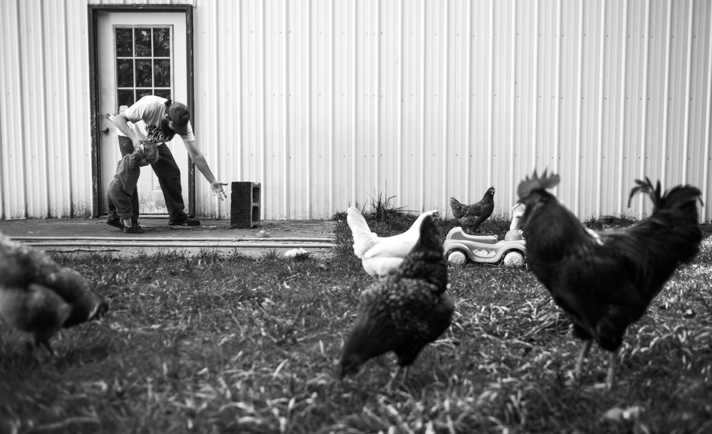 "After picking Anakin up off the ground Ben points to smushed chicken feces as he says, ""look at what you were just laying in!""     The farm had six free-range chickens until they discover one became a rooster."