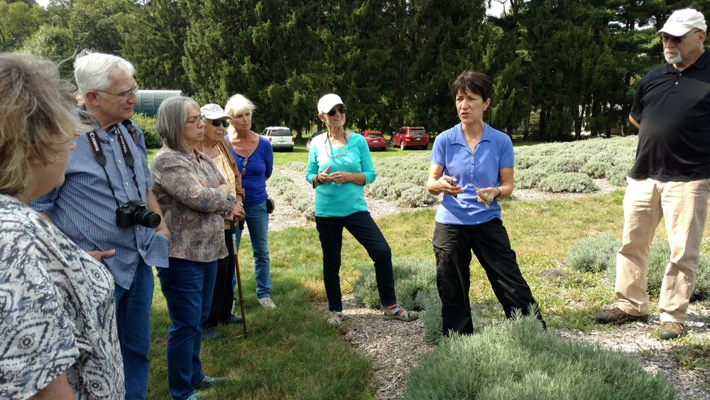USLGA board member Martha Wilczynski showing the group how to propagate lavender through a cutting demonstration.