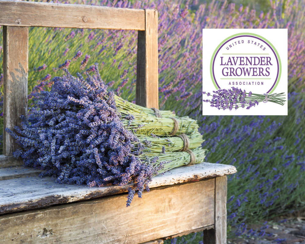 USLGA USLGA was formed to support and promote the United States Lavender industry and allows a collective voice for lavender growers and those interested in, or doing business with, lavender in the U.S. It supports lavender farms, connects growers to buyers and provides continual education for both lavender growers and lavender users.