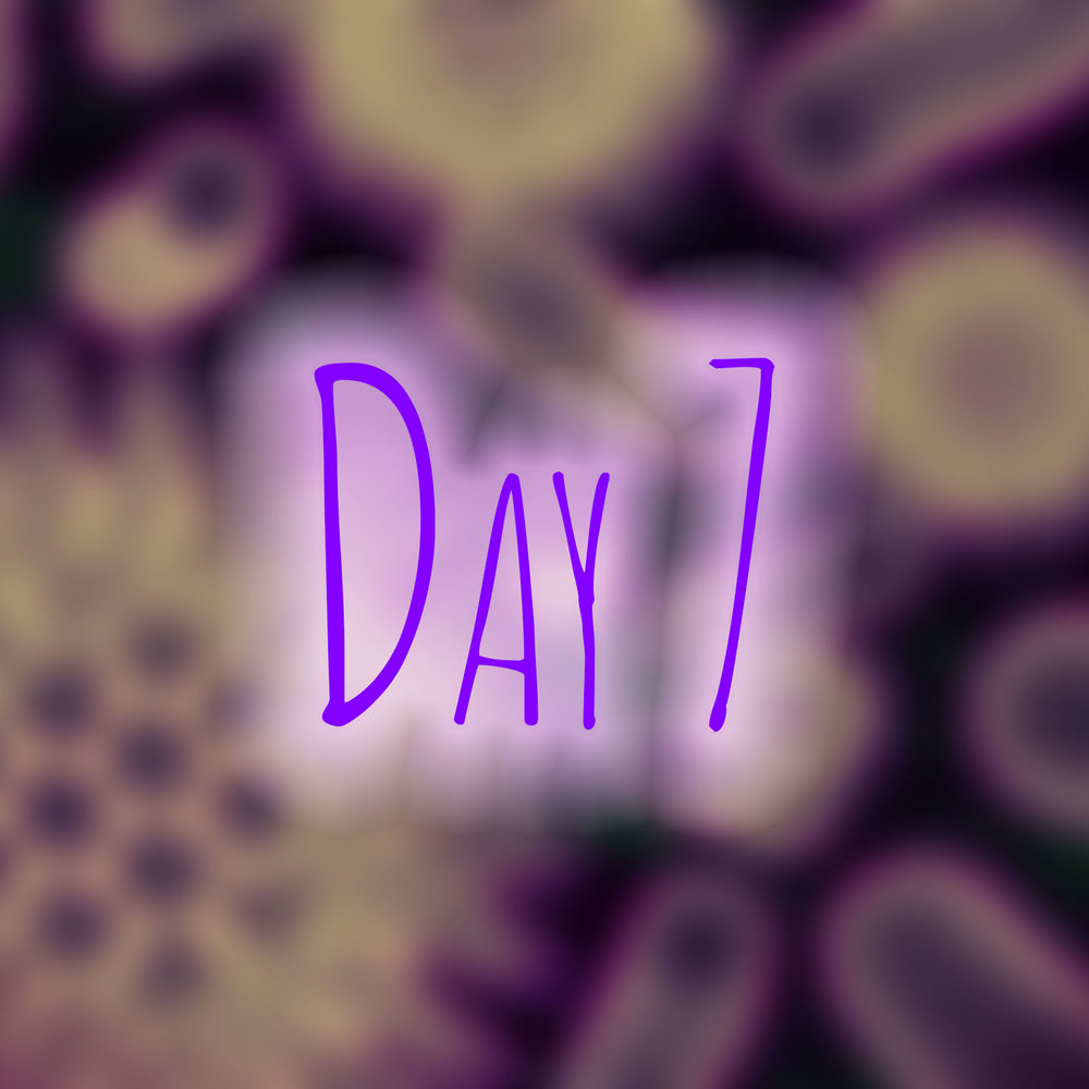 day7b.jpg