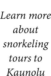 snorkeling tours text
