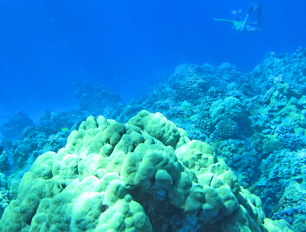 Coral reef at Olowalu Maui