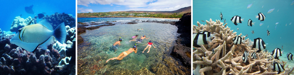 ecotourism in hawaii