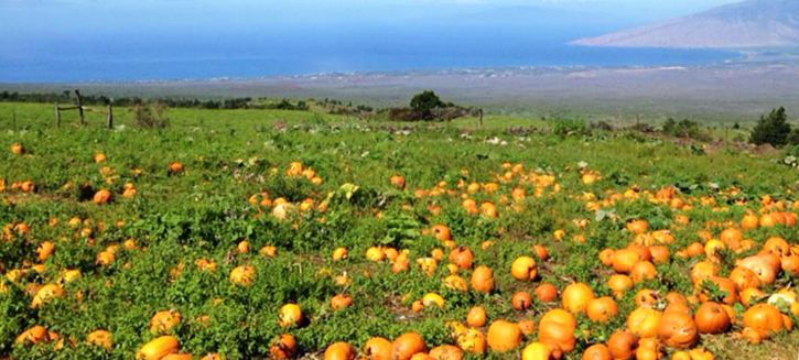 Kula Country Farms Pumpkin Patch