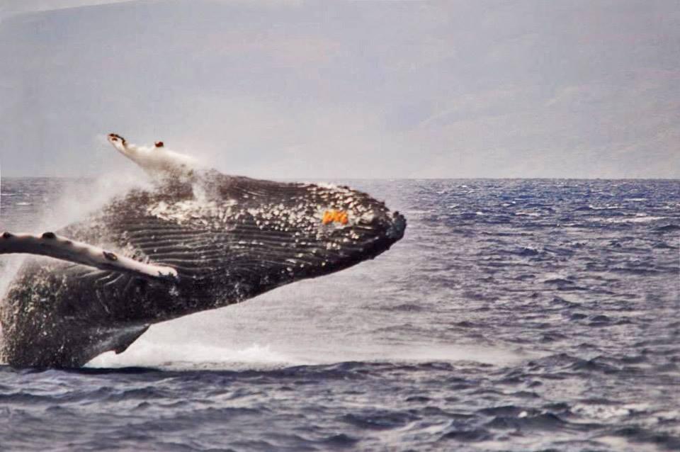 whale hair