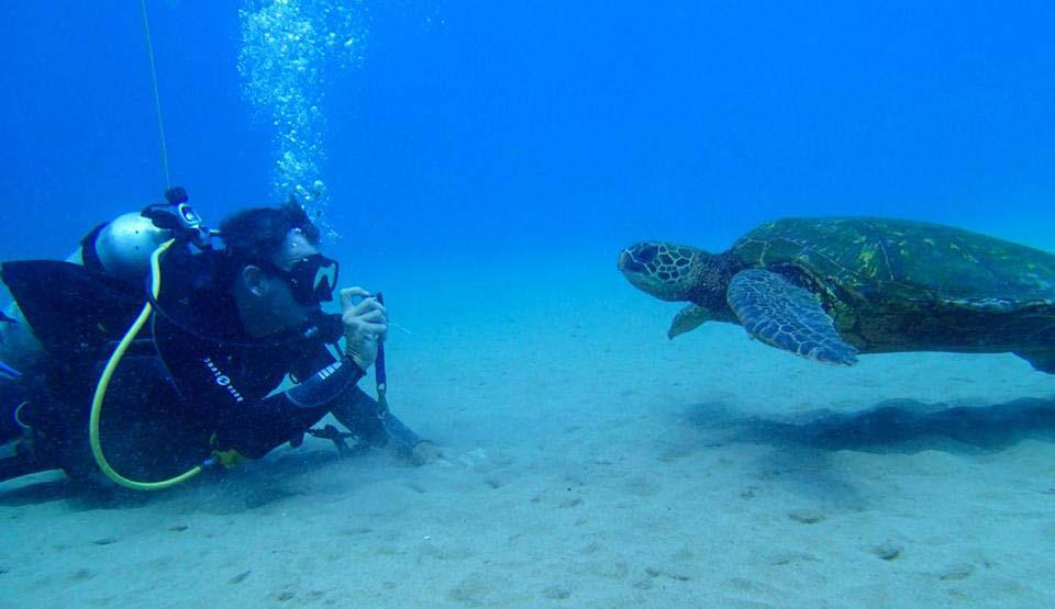 Scuba Turtles