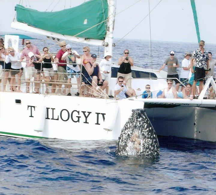 Whale T4
