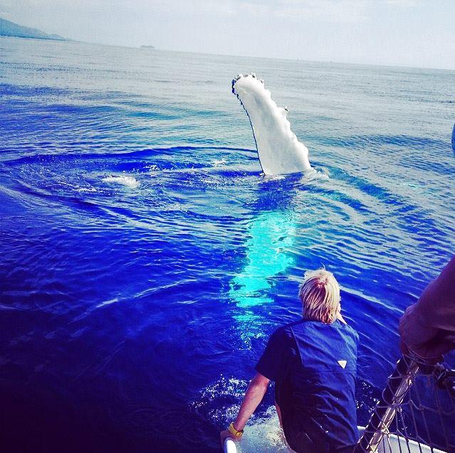 Maui whale breach