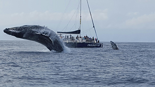 Maui whale watching tours