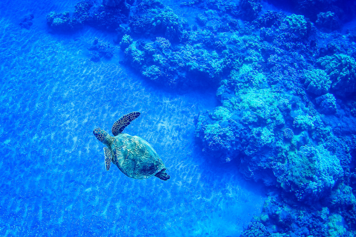 Its Turtle Time In Hawaii Maui Lanai The Captains Log