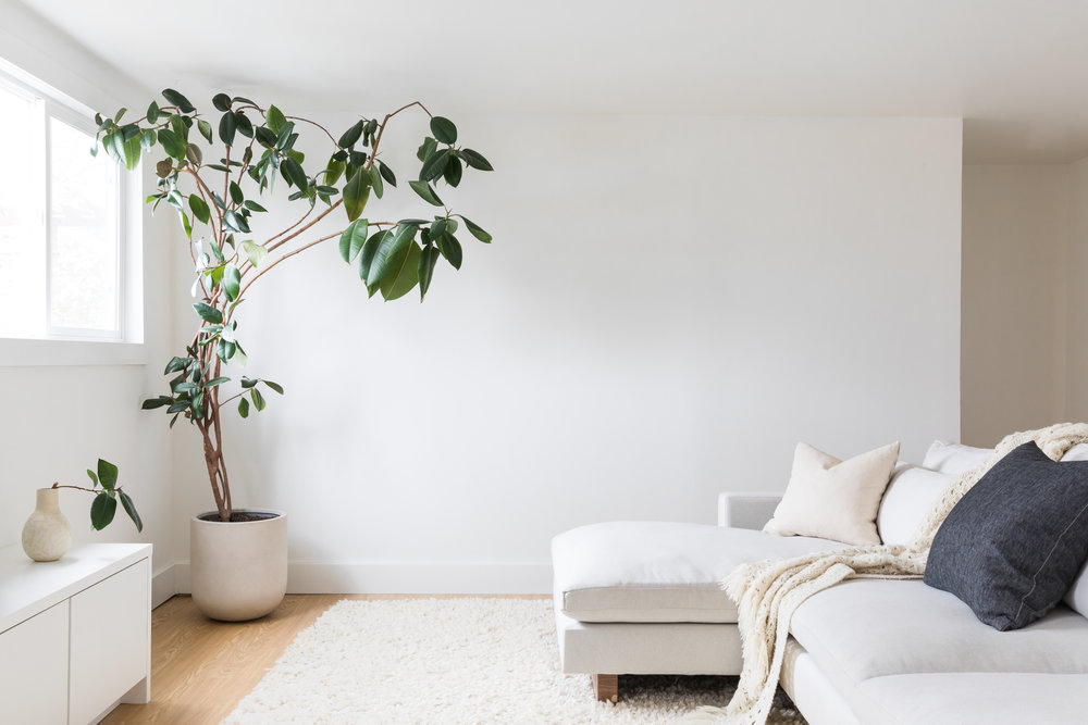 Minimalist basement living room with light grey sectional and large rubber tree.