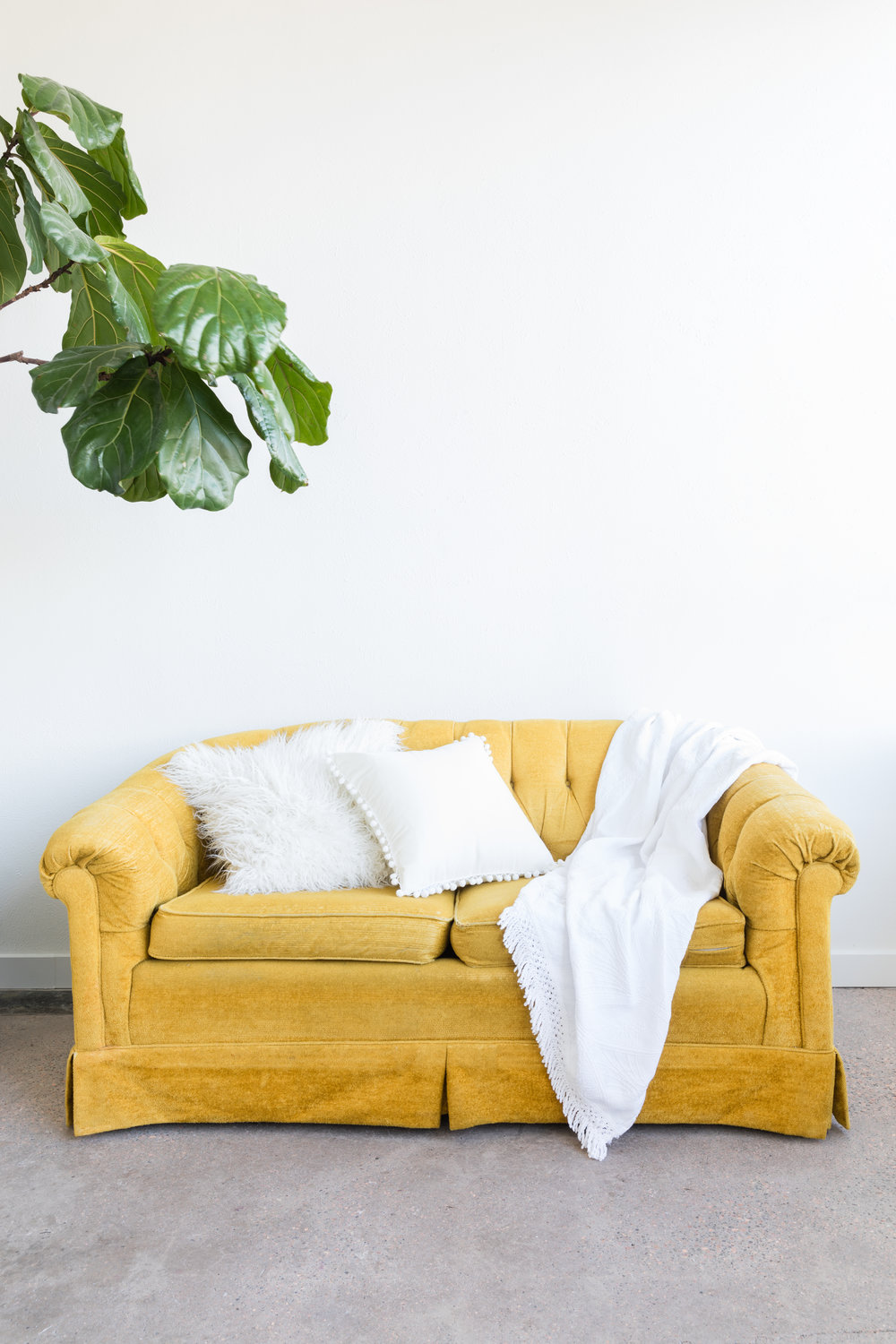 White studio with cement floors, yellow velvet couch, and fiddle leaf fig tree.