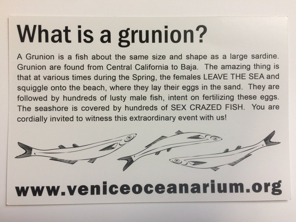 "Tim Rudnick, this flyer's author, has taken some flak for describing the grunion's mating ritual as a ""sex-crazed fish party,"" but he says he's trying to get people interested in grunion. Photo credit: Adriana Cargill"