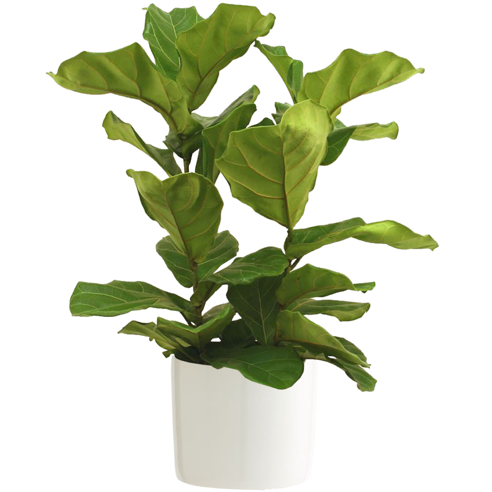 $89   Planter $20