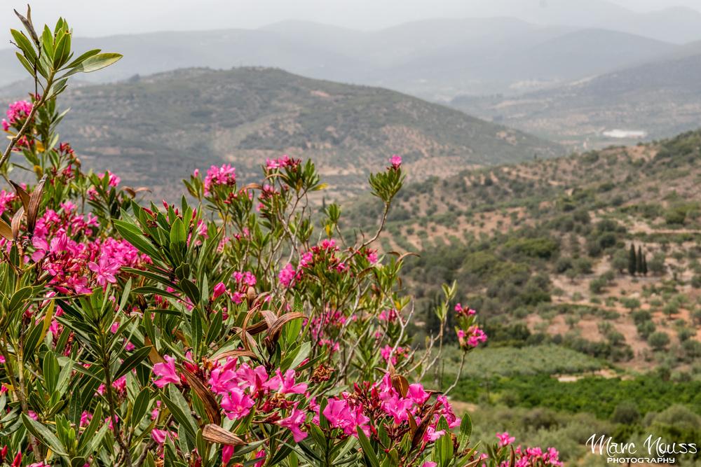 Mycenaean View