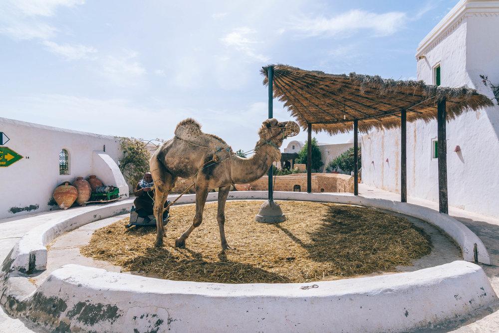 Radisson Blu Djerba - Marc Nouss Photography-32.jpg