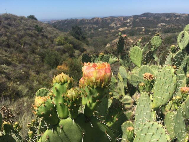 Discover the incredible views that #OC nature has to offer and join us on a FREE guided activity through some of Orange County's most beautiful open spaces! Sign-up for an upcoming event at the link in our bio.