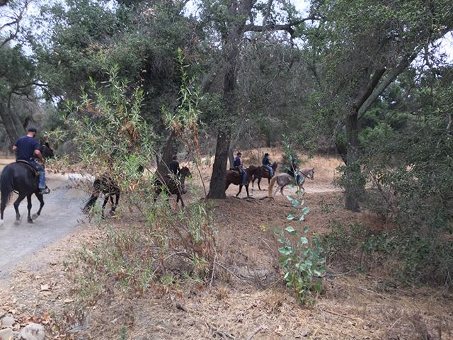 Saturday, August 26, saddle up, get outside, and explore beautiful Trabuco Rose Preserve during a FREE #MeasureM2 Equestrian Ride. Participants are required to bring their own horses. Visit the link in our bio for more information!