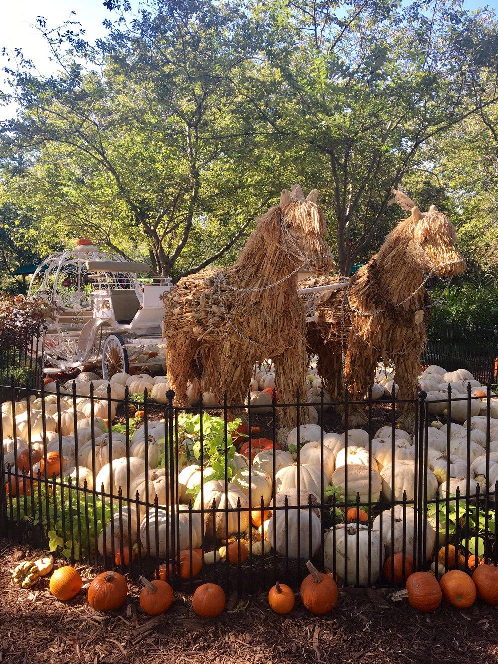Dallas Arboretum — Wisteria Jane Hair