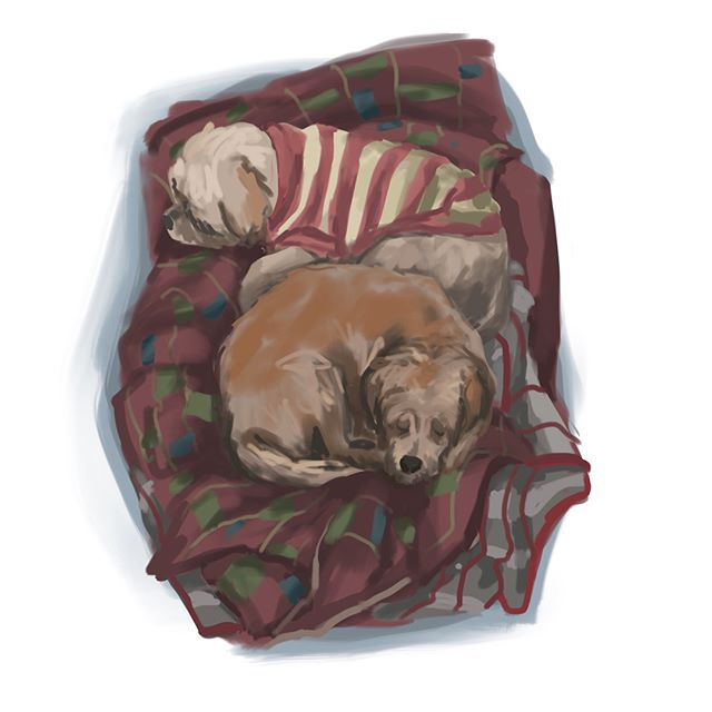 I started painting Iris and then Rocko came in so I had to paint them both 💕 I included the time lapse video for this one too 🐶 #doggies #petsofinstagram #illustration #procreate #love #cute #art #drawing #arte #dogs #dogs #timelapsevideo