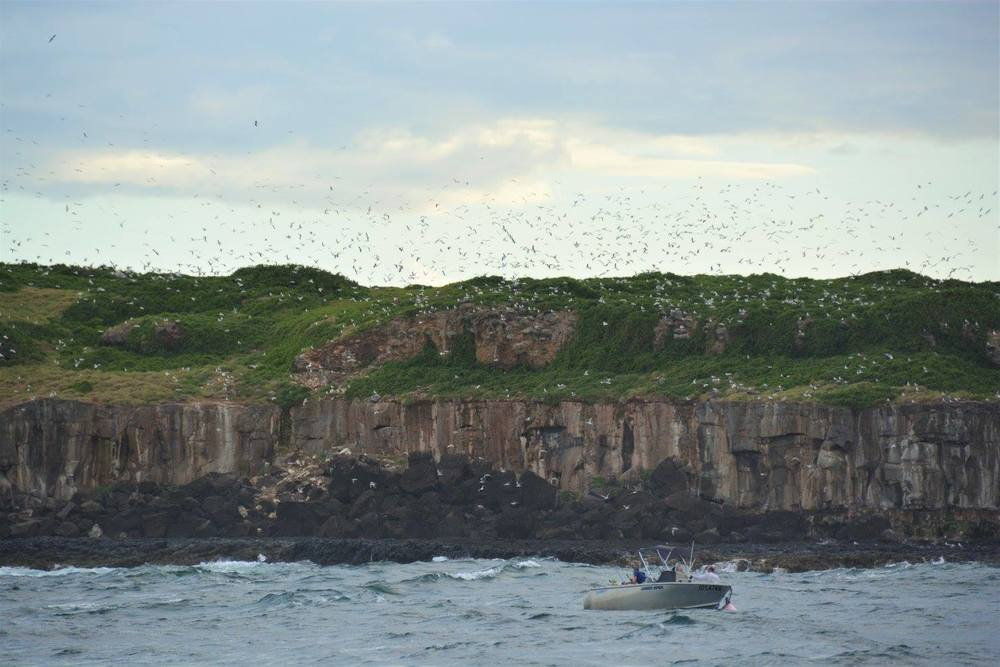Cook Island off Tweed Heads