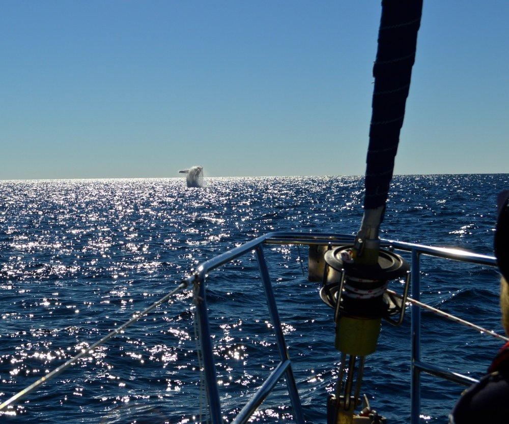 Hamilton Island Whale Watching.jpg