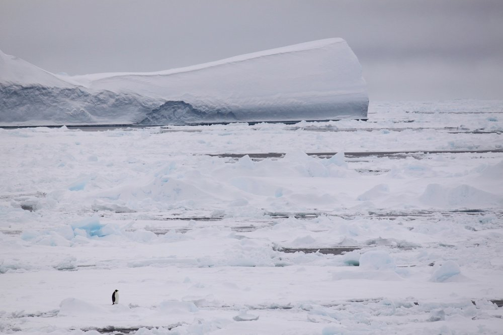 Emperor Penuin and iceberg, from onboard the Aurora Australis.jpg