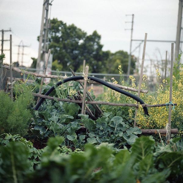 PHOTOGRAPHY //GARDEN
