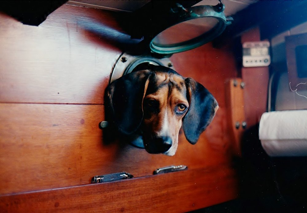 Toby the boat beagle