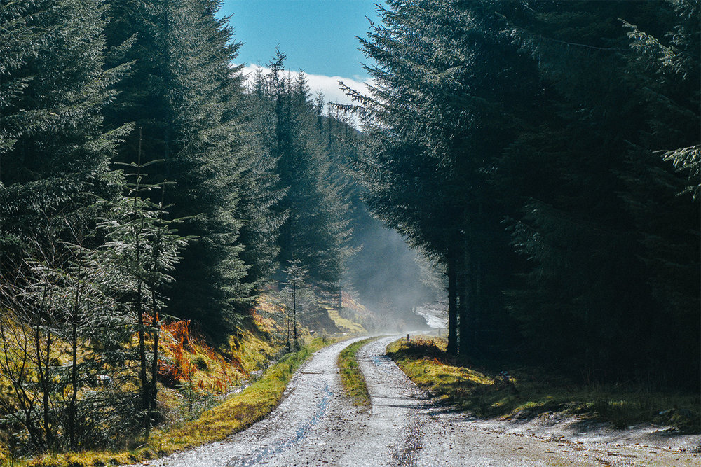 Kildermorie Forest