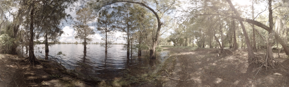 """Blood Memory VR""  Atchafalaya Basin, Louisiana"