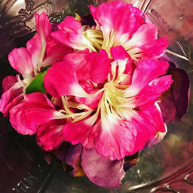 Carnations are pretty incredible. They outlast all the other flowers in the bouquet. They're pretty, versatile, resilient, and yet, so underrated. I think they might be one of my new favorites! #donttellthepeonies #orthedaisies #ortheroses #orthetulips #ortheviolets #orthehydrangea #alltheflowers #allthetime #pink #carnationpetals