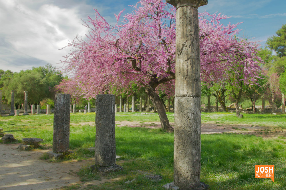 Lavender tree at the Archaeological Site of Olympia