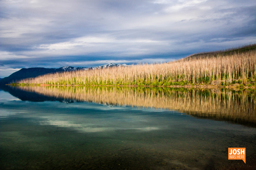 Scorched forest and Lake McDonald