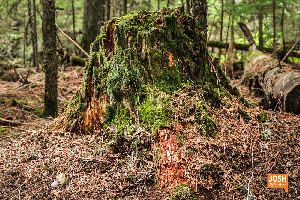 Portrait of a stump