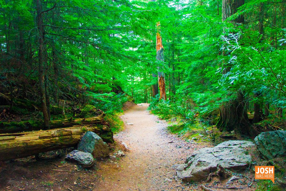 Avalanche Lake trail 1