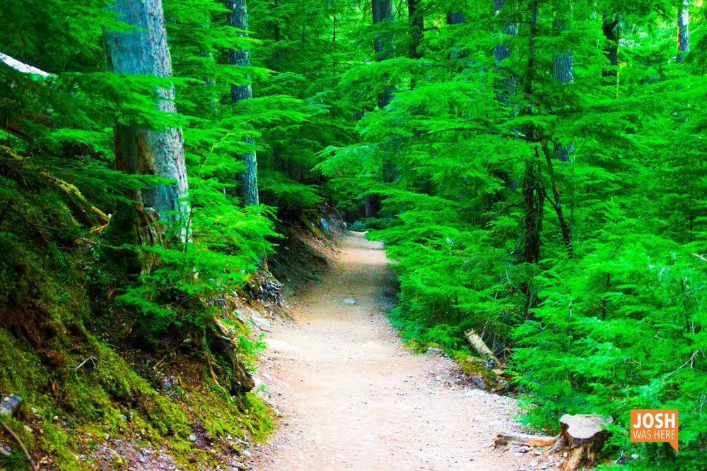 Avalanche Lake trail 2
