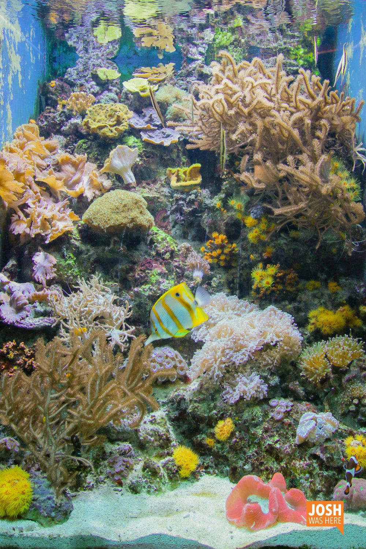 Tropical fish, Shedd Aquarium