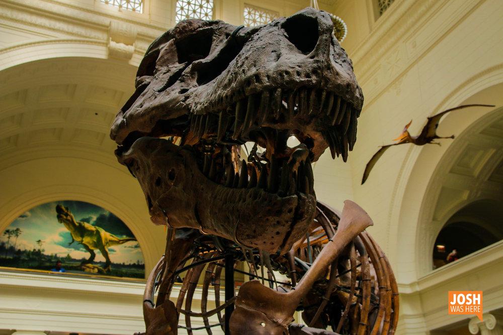 SUE the t-rex