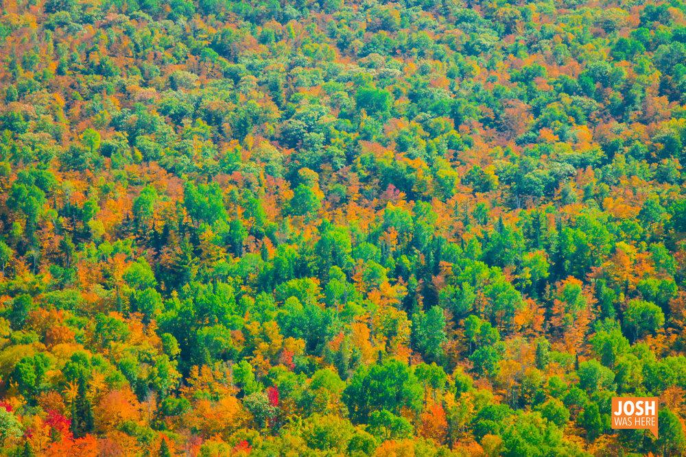 Autumn colors, Brockway Mt