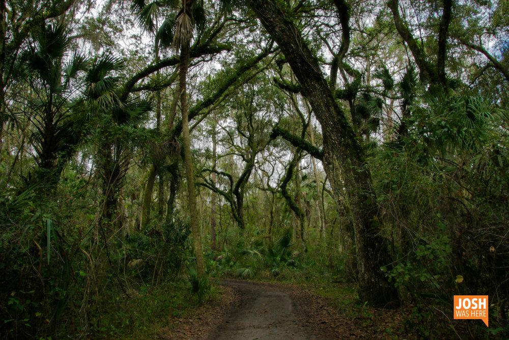 Path in Hillsborough River State Park