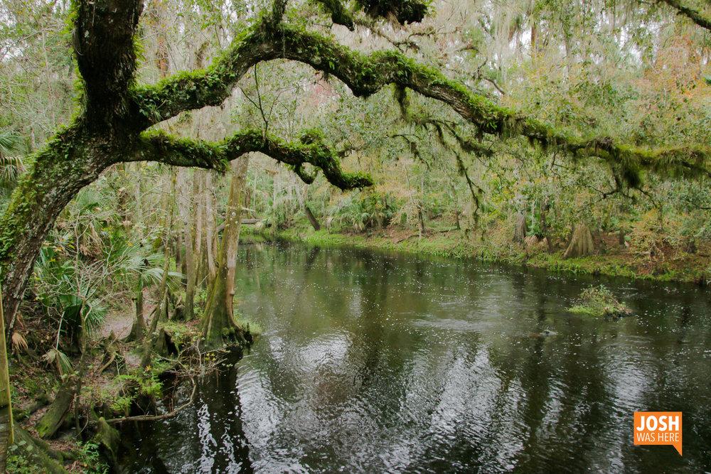 Hillsborough River 1